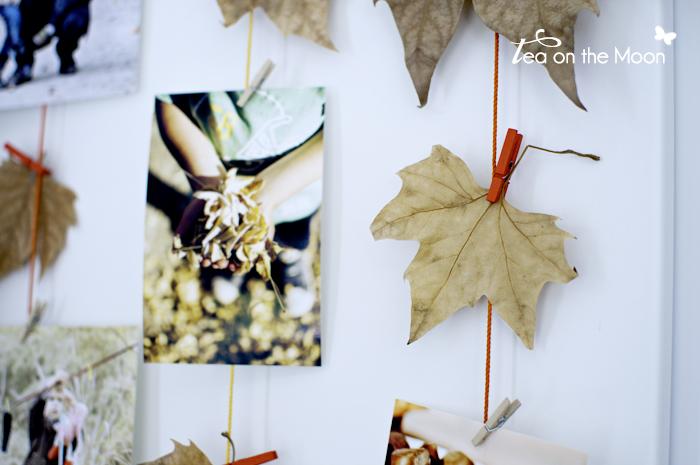 Herbstblätter mit Fotos