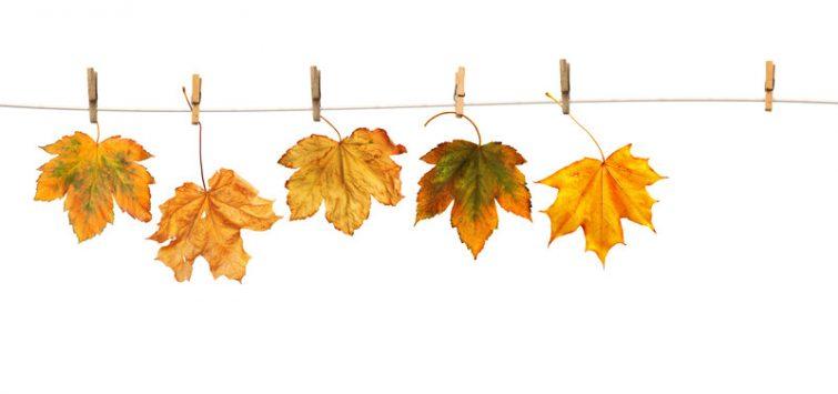 Herbstdeko selber machen _ canstockphoto29426947