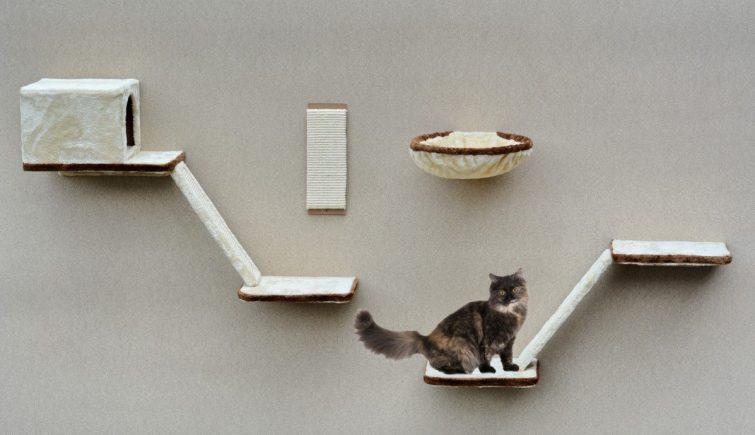 Katzenmöbel Für Die Neue Einrichtung