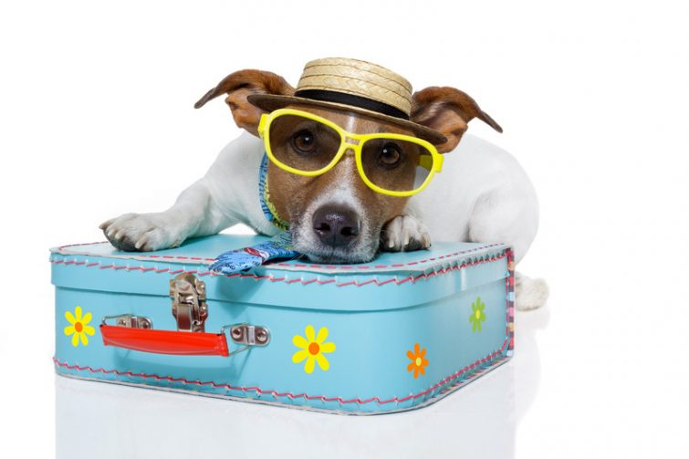 Auswandern mit Hund