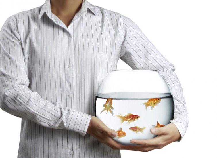 Umzug mit Aquarium
