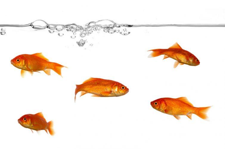umzug mit aquarium so berstehen auch deine fische den wohnortwechsel