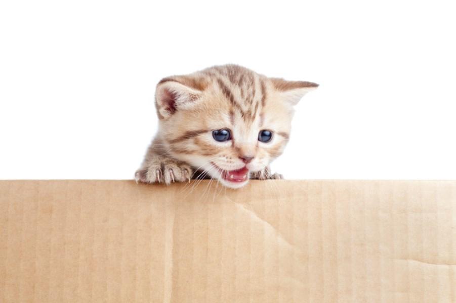 umziehen mit katzen wohnortswechsel auf vier leisen pfoten. Black Bedroom Furniture Sets. Home Design Ideas